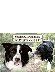 Border Collie -  Best of Breeds