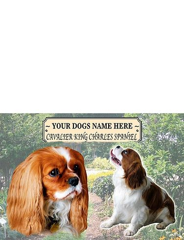King Charles Spaniel - Best of Breeds