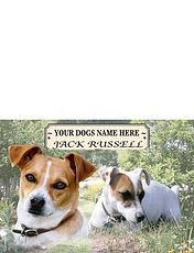 Jack Russell - Best of Breeds