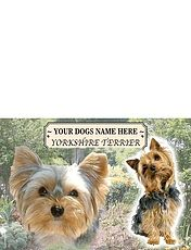 Yorkshire Terrier - Best of Breeds